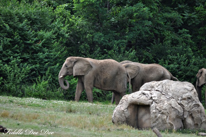 nashville_elephants