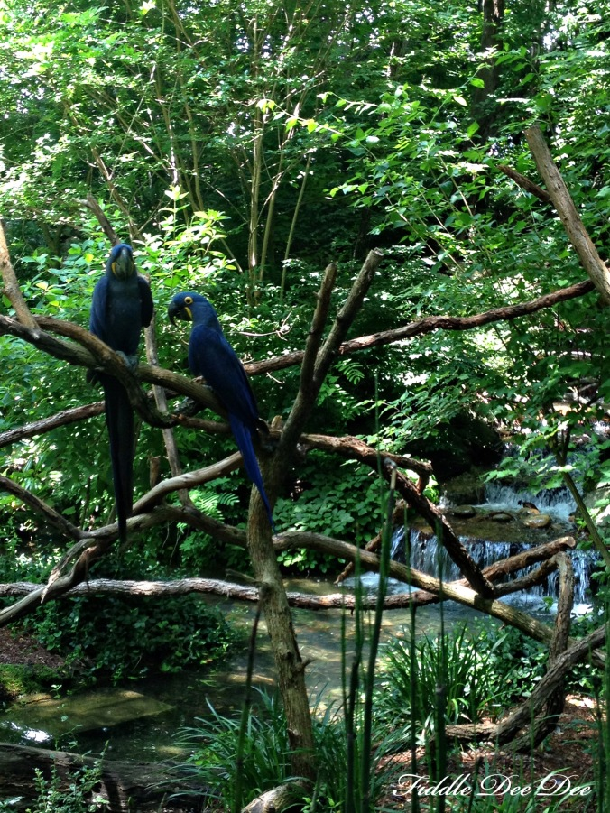 An exhibit of tropical birds greeted us first .... absolutely beautiful without a doubt!