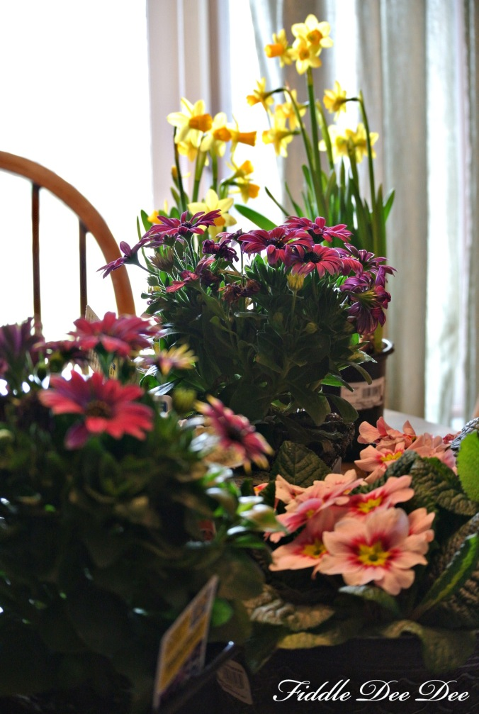 Spring blooms for an indoor container garen to brighten someone's day.