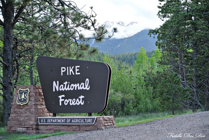 Welcome to Pike National Forest