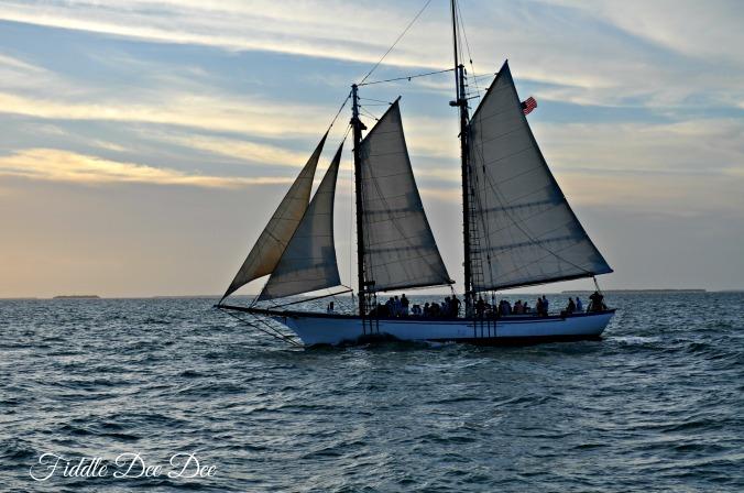 Ahoy mates