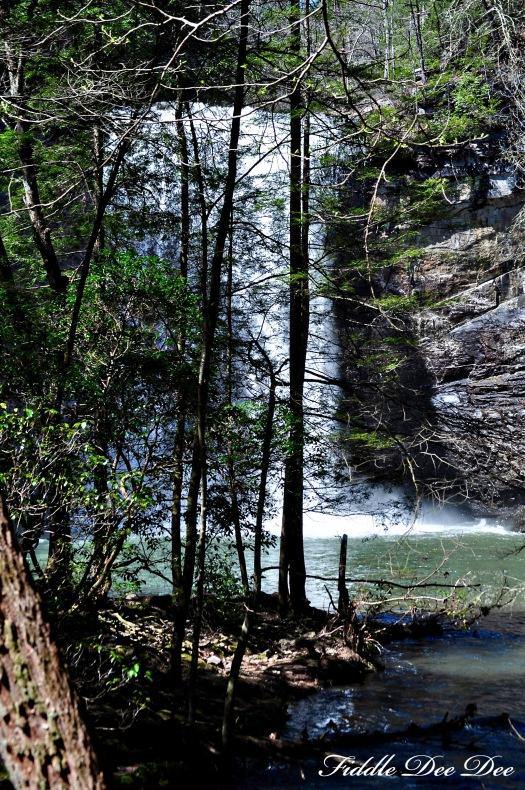 Glimpse of the falls through the trees