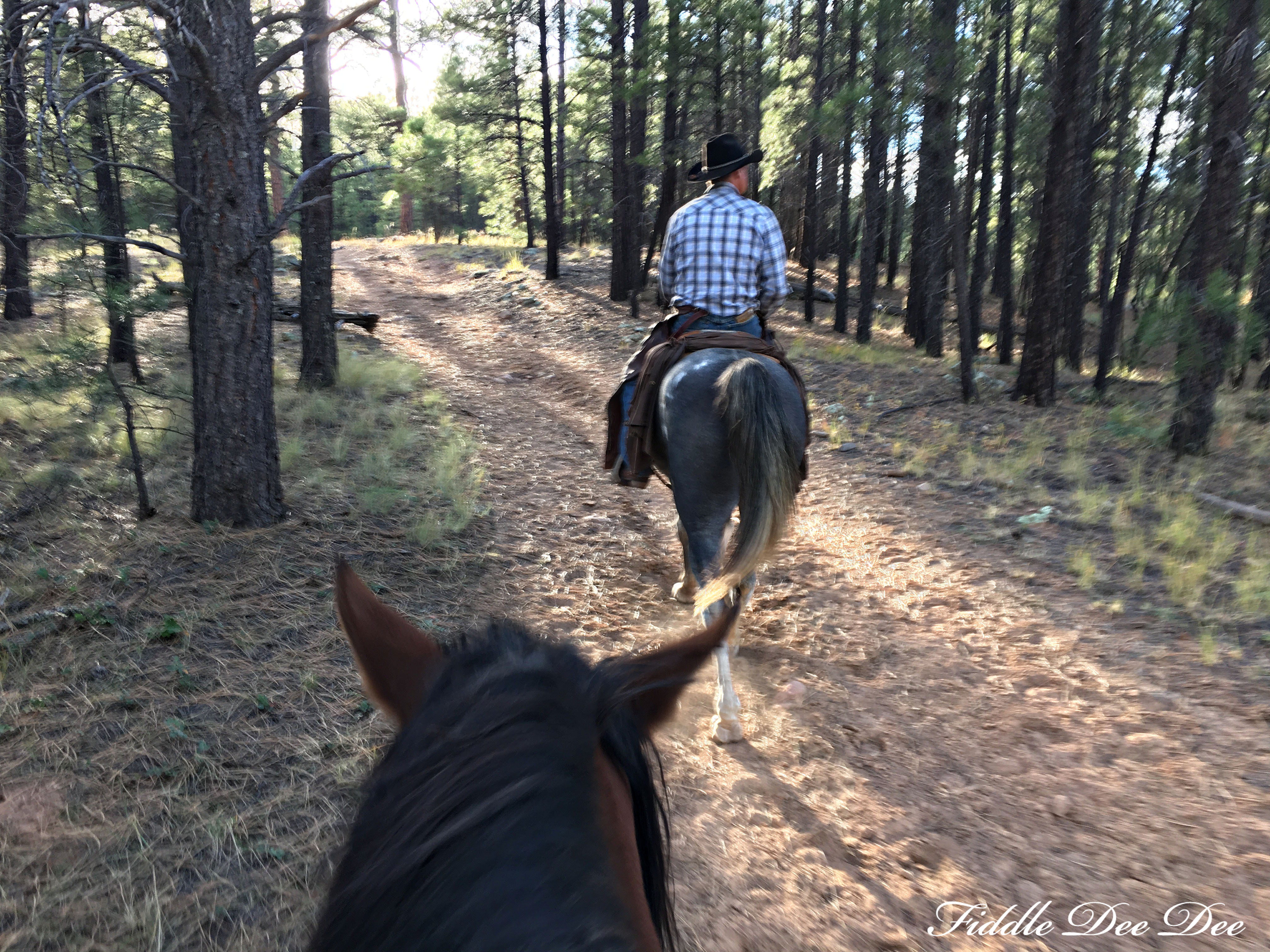 arizona-weekend-18-oh-fiddledeedee-com