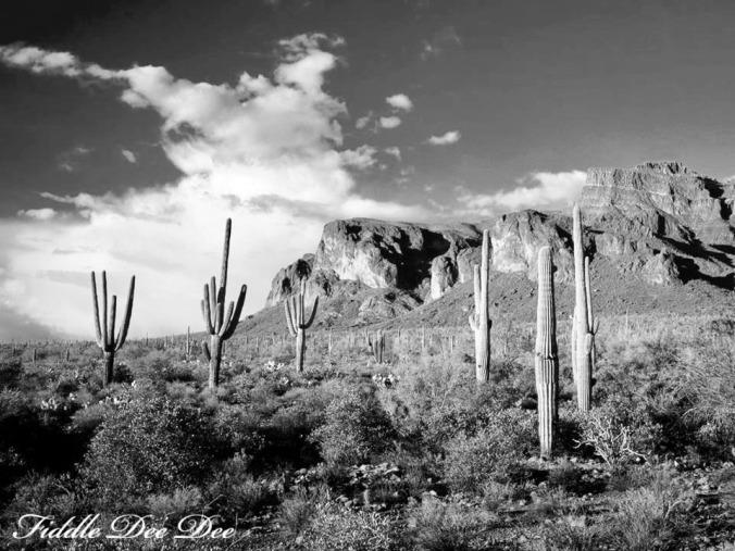 arizona-weekend-20-oh-fiddledeedee-com