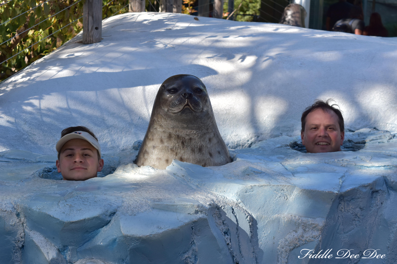 San-Diego-Zoo-North-Pole | ohfiddledeedee.com