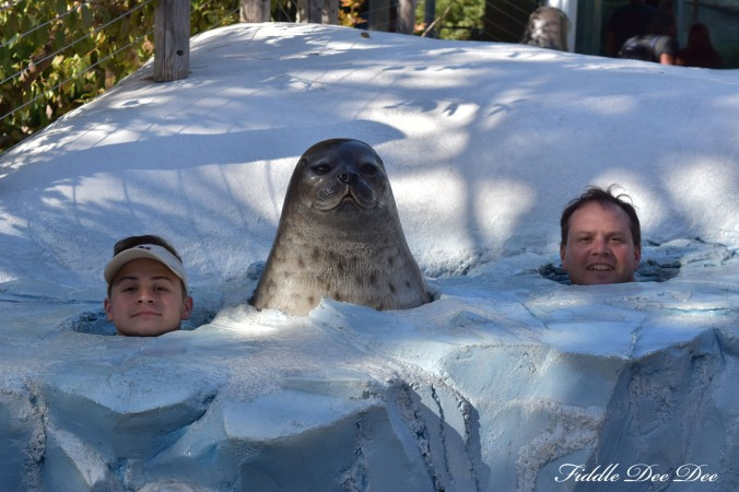 San-Diego-Zoo-North-Pole | ohfiddledeedee.com