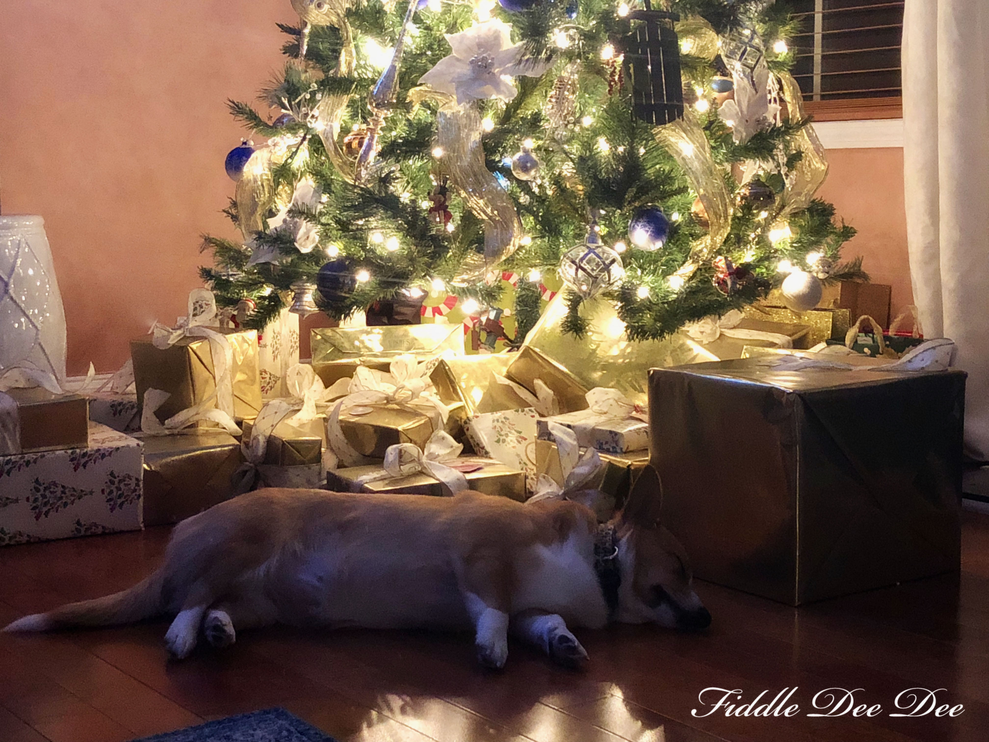 Christmas-Corgi