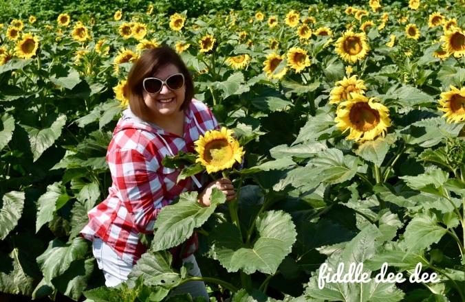 Dawsonville Georgia Fausett Farms Sunflowers / Fiddle Dee Dee