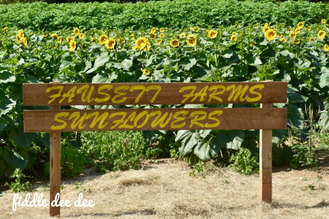 Fausett Farms Sunflowers / Fiddle Dee Dee