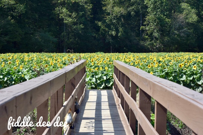 Fausett Farms Sunflower Field / Fiddle Dee Dee