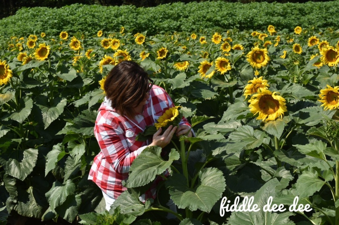 Sunflower Farm /Fiddle Dee Dee