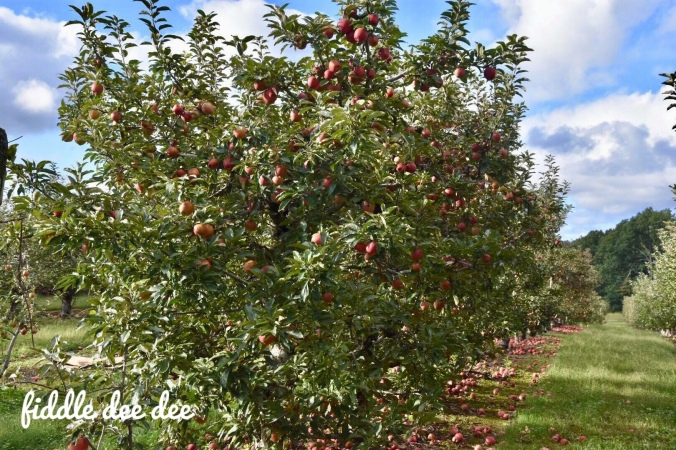 Crow Mountain Orchard